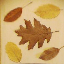 le mille foglie